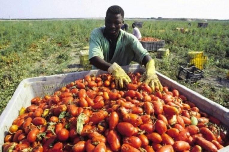 Processo Sabr, schiavitù nei campi: condannati imprenditori e caporali