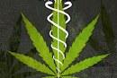 Intervista a Giovanni Caggia sulla cannabis terapeutica