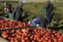 Incidente a Lesina, tornavano dal lavoro sui campi: morti 12 braccianti africani