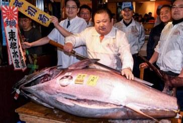 Frode alimentare ed etichettatura errata: attacco ai profitti mafiosi