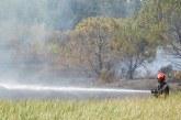 Incendi nel parco di Lido Pizzo a Gallipoli