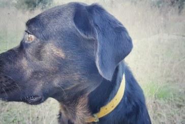 Il karma del Rottweiler